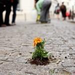 Guerilla Gardening déclare la guerre aux espaces urbains abandonnés… pour leur offrir une seconde vie ! | Patrimoine Végétal et Biodiversité | Scoop.it