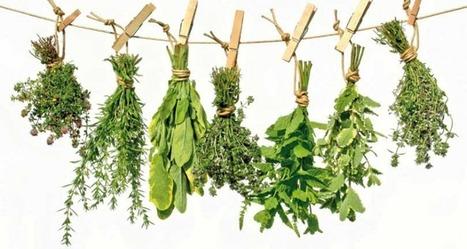 Conozca el uso de las 230 plantas más efectivas para sanar y tratar enfermedades | Permacultura, Agricultura Organica, Huertos Urbanos, Horticultura, bosques de alimentos y otros BIO | Scoop.it