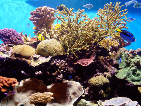Effects of Ocean Acidification on Corals | All about water, the oceans, environmental issues | Scoop.it