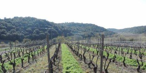 Murviel : un dispositif pour accompagner l'évolution des pratiques des viticulteurs | Actualités agricoles LRMP | Scoop.it