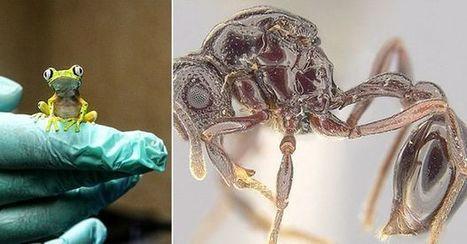 Les grenouilles, utiles à la recherche sur les insectes | EntomoNews | Scoop.it