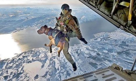 Former Navy SEAL Trains Dogs to Fly | Navy SEALs | Navy Seals | Scoop.it