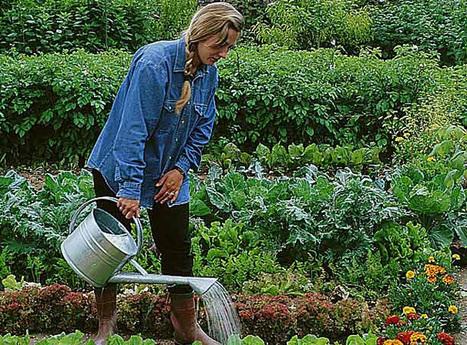 Potager : arroser juste ce qu'il faut | jardins et développement durable | Scoop.it