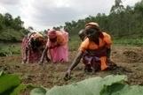 FAO -Nouvelles:L'agriculture, moteur de croissance indispensable à l'Afrique | Chimie verte et agroécologie | Scoop.it