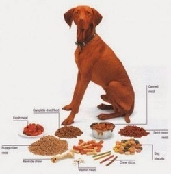 Dog Health Care: Why Healthy Dog Treats are Required?   Dog Health Care   Scoop.it