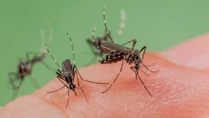 Des moustiques et des hommes - Envoyé spécial (+vidéo)   Toxique, soyons vigilant !   Scoop.it