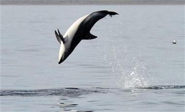 Swiss lawmakers support ban on dolphin aquariums   Reuters   incarcerated zoo animals   Scoop.it