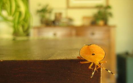 Como alejar a los insectos sin usar insecticidas   Ecologia y medio ...   agricultura ecologíca   Scoop.it