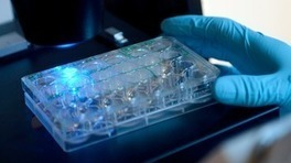 Cardiff scientists discover cancer-fighting compound   Scientific Discovery   Scoop.it