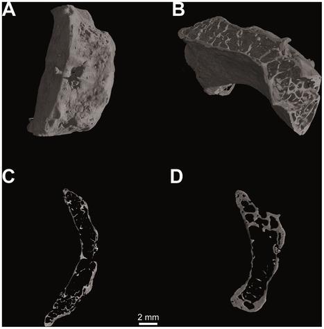 Los neandertales ya pudieron comunicarse con el habla | Aux origines | Scoop.it
