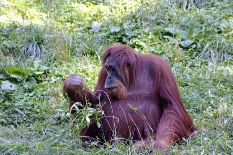 Palm Oil » jimbase.com | Jimbase Articles | Scoop.it