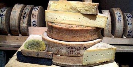 Italie : Le Bitto est fabriqué entre juin et septembre, en montagne, quand les bêtes sont dans les alpages. | thevoiceofcheese | Scoop.it