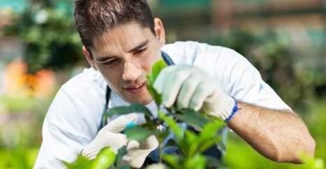 Bioloc » Agritorino: orti sociali da coltivare ai giovani disoccupati   CicerOOs_Scooped   Scoop.it