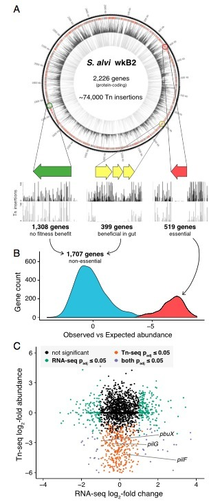 Genome-wide screen identifies host colonization determinants in a bacterial gut symbiont | Interaction, and more... | Scoop.it