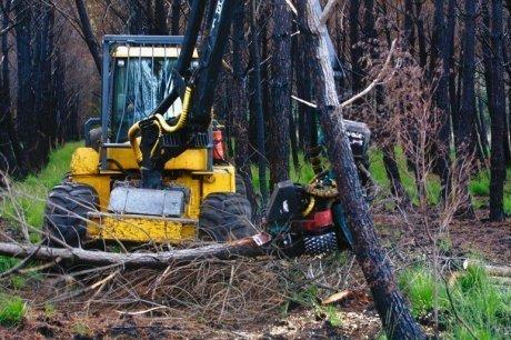 Un quart des entreprises de travaux forestiers en difficulté - Sud Ouest | ACTUALITE EN AQUITAINE | Scoop.it