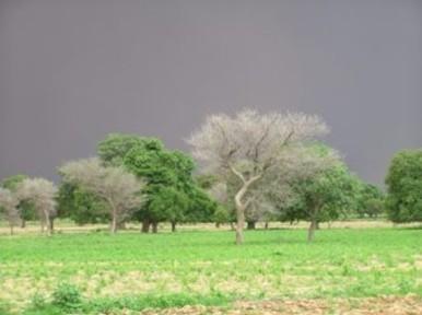 La protection et la préservation de la biodiversité | Protection de la biodiversité | Scoop.it