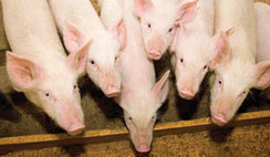 MeatPoultry.com | Food and Fibre Production in Australia | Scoop.it