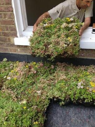 green roofs | BioArchitecture | Scoop.it