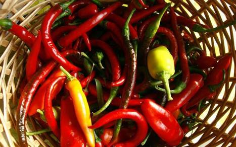 Peppers a hot topic in medical research at UC Davis | Food for Foodies | Scoop.it