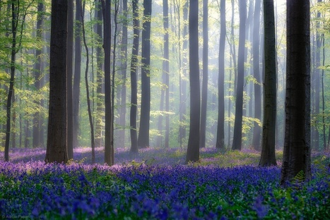 Flowery Forest | Awesome Photography | Scoop.it