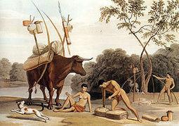 "Khoikhoi - Wikipedia, the free encyclopedia | Saartje Baartman, aka ""Hottentot Venus"" | Scoop.it"