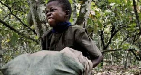 Nestlé, causa negli Usa per l'uso di manodopera minorile nelle piantagioni di cacao | Il mondo che vorrei | Scoop.it