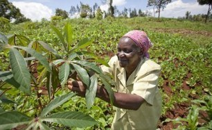 allAfrica.com: Africa: Investing in Agriculture Most Effective Way to Eradicate Poverty in Africa - UN Official | Pverty Assignment_Parth Uday | Scoop.it