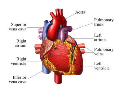 Heart Symptoms, Treatment, Causes, Diagnosis and Articles | indian medical tourism website www.medicalroots.com | Scoop.it