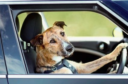 Traveling to Europe With Your Dog   Animal Bliss   Animal Welfare   Scoop.it