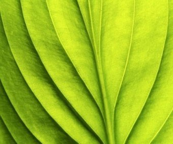 in-cosmetics: greener than ever? - Premium beauty | All Cosmetics | Scoop.it
