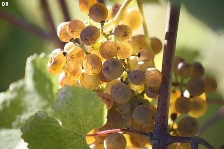 Manseng'Phonie Monein aux couleurs du Jurançon   In Vino Veritas   Tourisme Sud-Ouest   Aquitaine OnLine   BIENVENUE EN AQUITAINE   Scoop.it