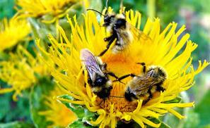 Methow Valley Herbs: Herbal Blogroll | Social media | Scoop.it