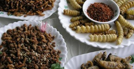 Le chocolat aux insectes se vend en Lorraine | Food Truck et cuisine de rue | Scoop.it