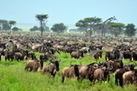The Serengeti: Plain Facts about National Park & Animals | Tropical Grasslands | Scoop.it