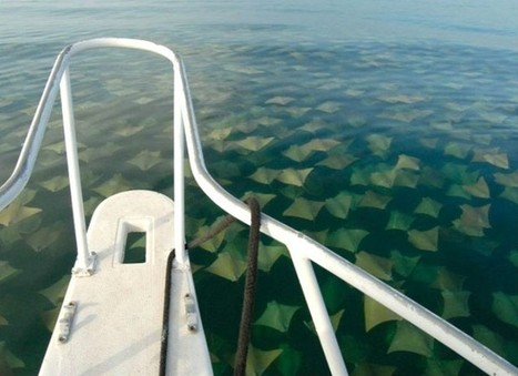 19 Pictures That Prove You Definitely Have Thalassophobia (Fear Of The Sea) | DiverSync | Scoop.it