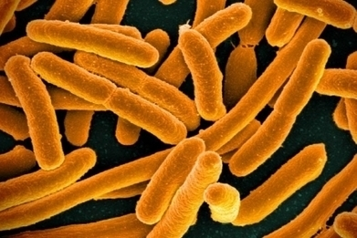 Indicator of chronic fatigue syndrome found in gut bacteria | Cornell Chronicle | Doctor Unite | Scoop.it