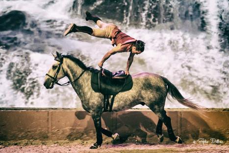 Un week-end au galop à Albi pour le Salon du cheval, du 12 au 14 février | Salon du Cheval | Scoop.it