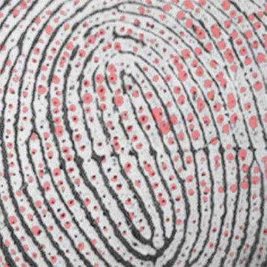 Color-changing polymer maps fingerprints | Amazing Science | Scoop.it