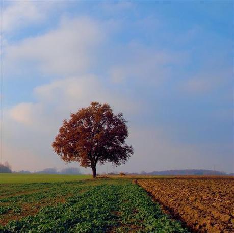 Une ceinture verte pour Dijon | Immobilier | Scoop.it