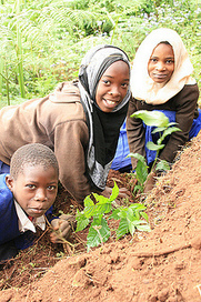 Trees for the Future » Help Us Change the World, One Tree at a Time | Seeds and Their Growing Importance | Scoop.it