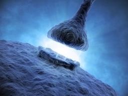 NEURO | Des neurones gardiens de l'apprentissage et de la mémoire | Pédagogie en enseignement supérieur | Scoop.it