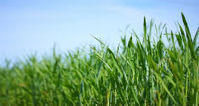 Denmark can triple its biomass production and improve the environment   The Biofuels Buzz   Scoop.it