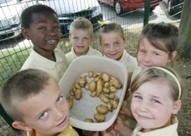 Hornchurch pupils tuck into the fruits of their gardening class | School Gardens | Scoop.it
