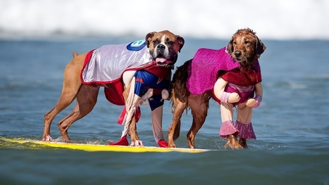 Surfing Dogs: An Instant Conversation - NPR (blog) | Dog Grooming | Scoop.it