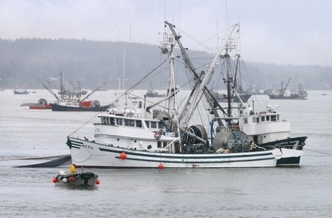 Judge overrules minister's decision to open herring fishery - Vancouver Sun   Fisheries and coastal communities   Scoop.it
