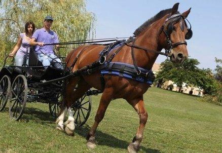 Champniers : un cheval, des chevaux, un Charentais champion de ... - Charente Libre | Cheval et sport | Scoop.it