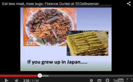 "A whole bunch of TED Talks about eating insects (or ""land shrimp"") 