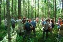 Ecological silviculture in Minnesota black ash stands: August 2013 workshop review | Silviculture and Forest News | Scoop.it