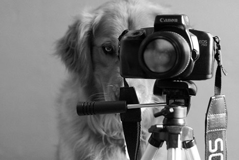 Teen Girl Shoots Beautiful and Creative Portraits of Her Pet Dogs | Filmmaking & Filmmakers | Scoop.it