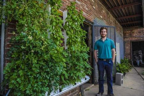 Learn about vertical gardening at free New Orleans workshop - The New Orleans Advocate | Vertical Farm - Food Factory | Scoop.it